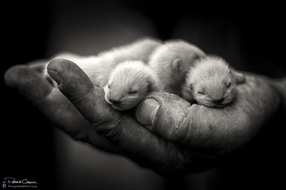 21 Photos of Baby Animals that Literally Fit In Your Palm