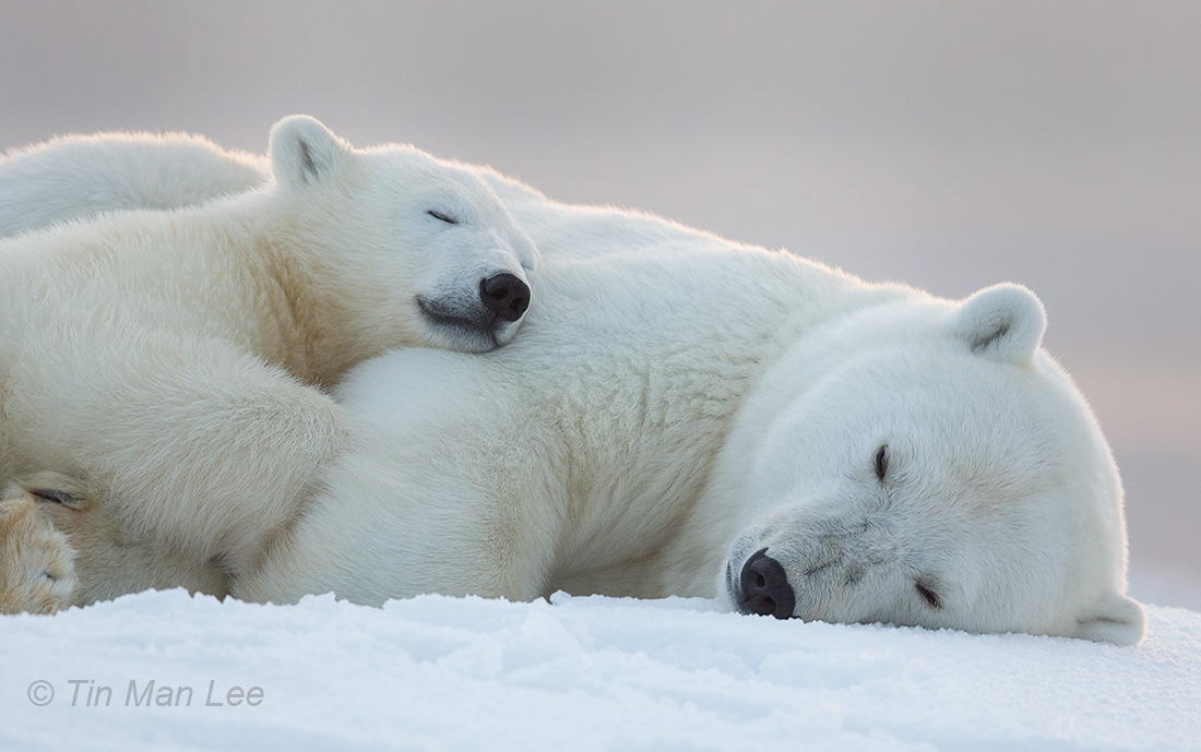 30 Sleepy Photos of Animals Napping... or Trying Really Hard Not To