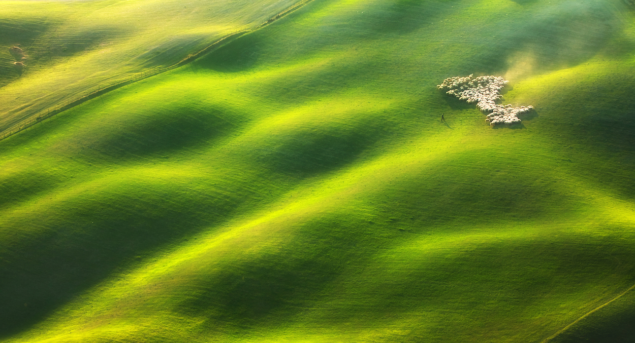 Marcin Sobas Captures Stunning Aerial Views of Tuscan Fields... Also Sheep