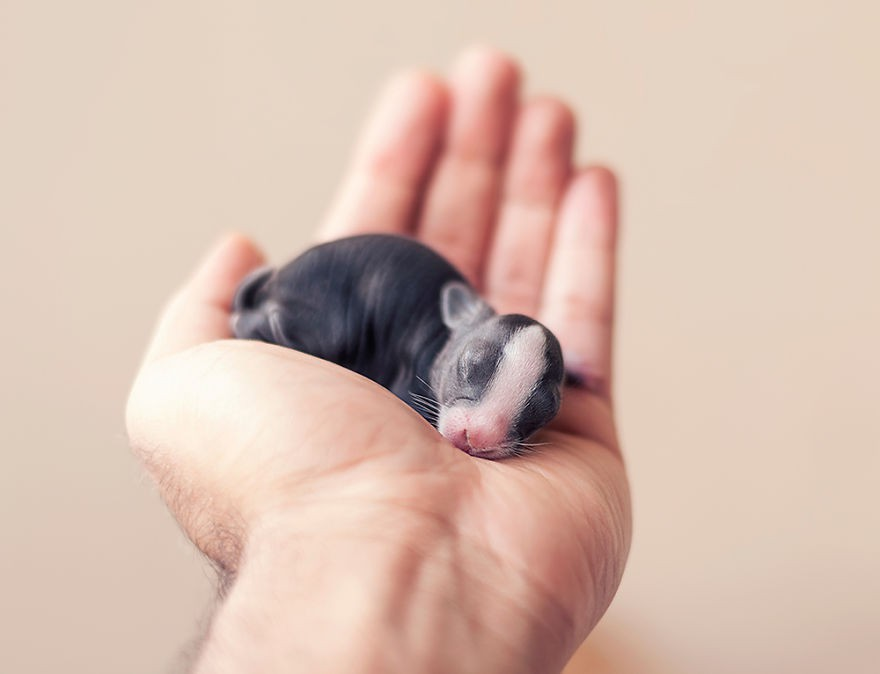 Touching Photos Show the First 30 Days of a Bunny's Life