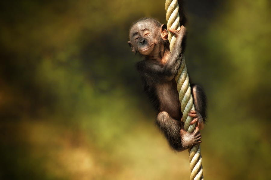 25 Incredibly Expressive Animal Portraits by Manuela Kulpa