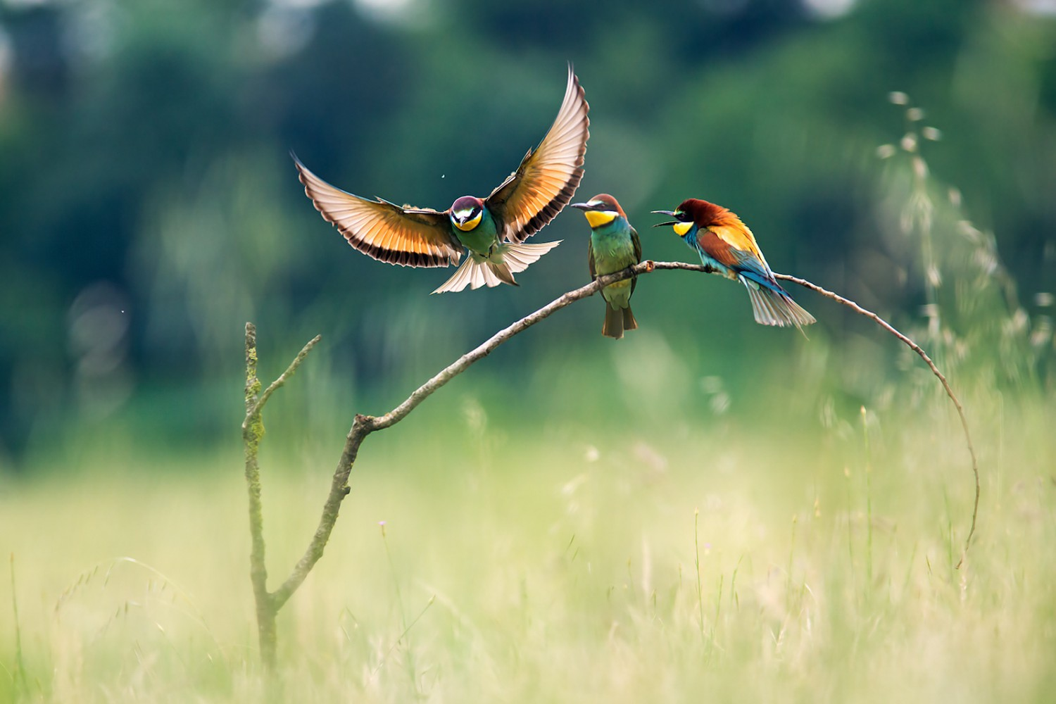 The Story Behind One of the Best Bird Photos on 500px