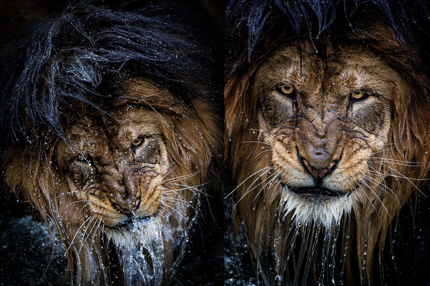 8k Animal Wallpaper Download: 500px Blog » Exclusive: The Story Behind The Most Intense