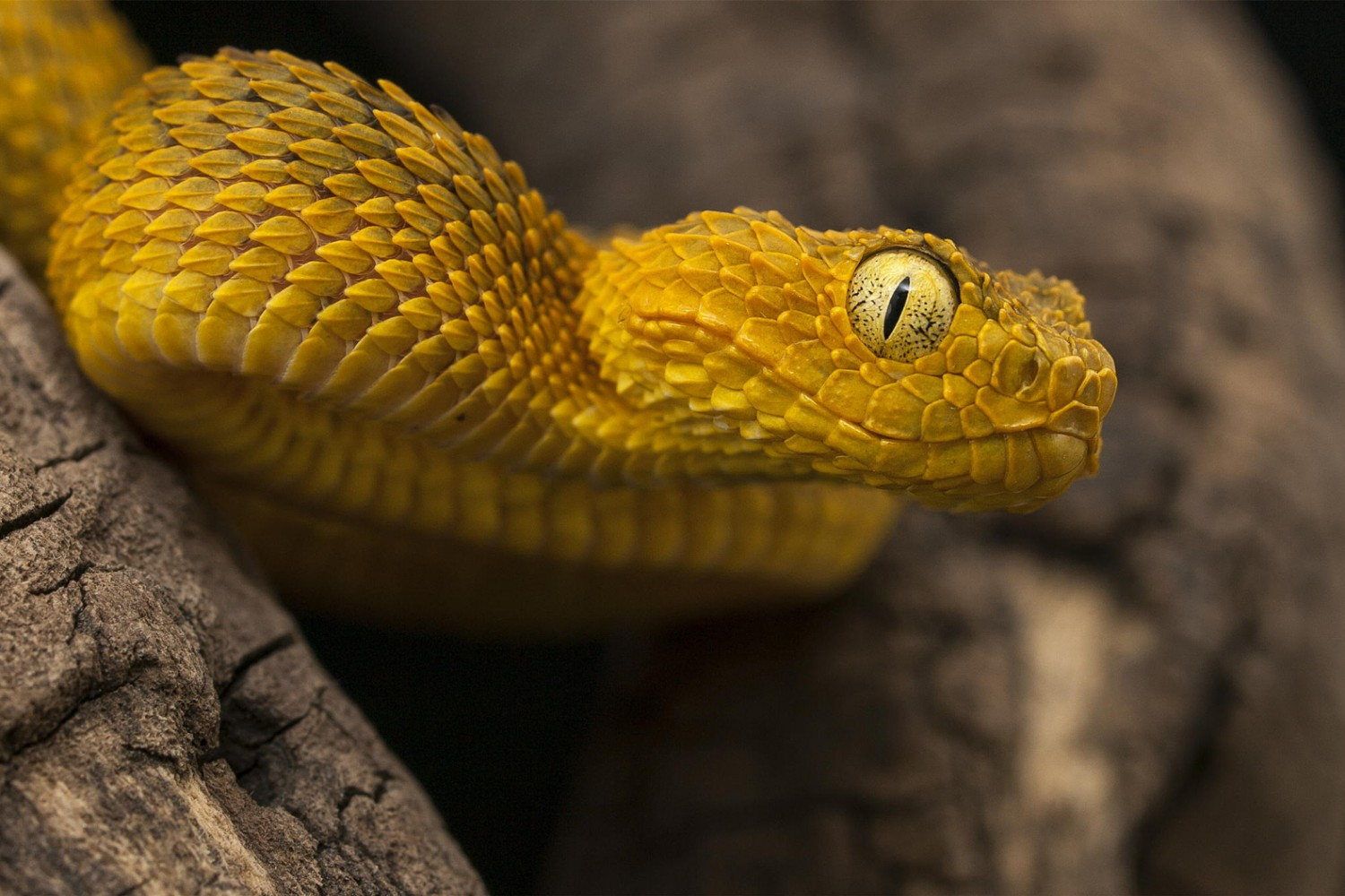 25 Terrifying...ly Awesome Snake Portraits