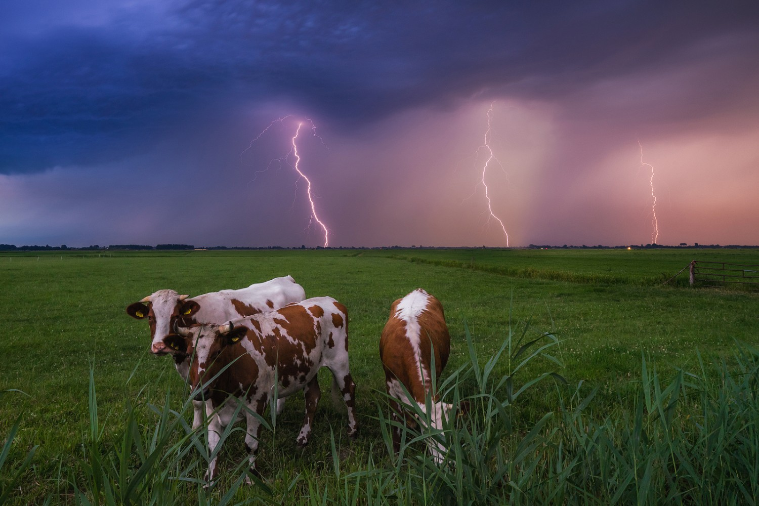 The Cow(s) Before the Storm, A Photo Story