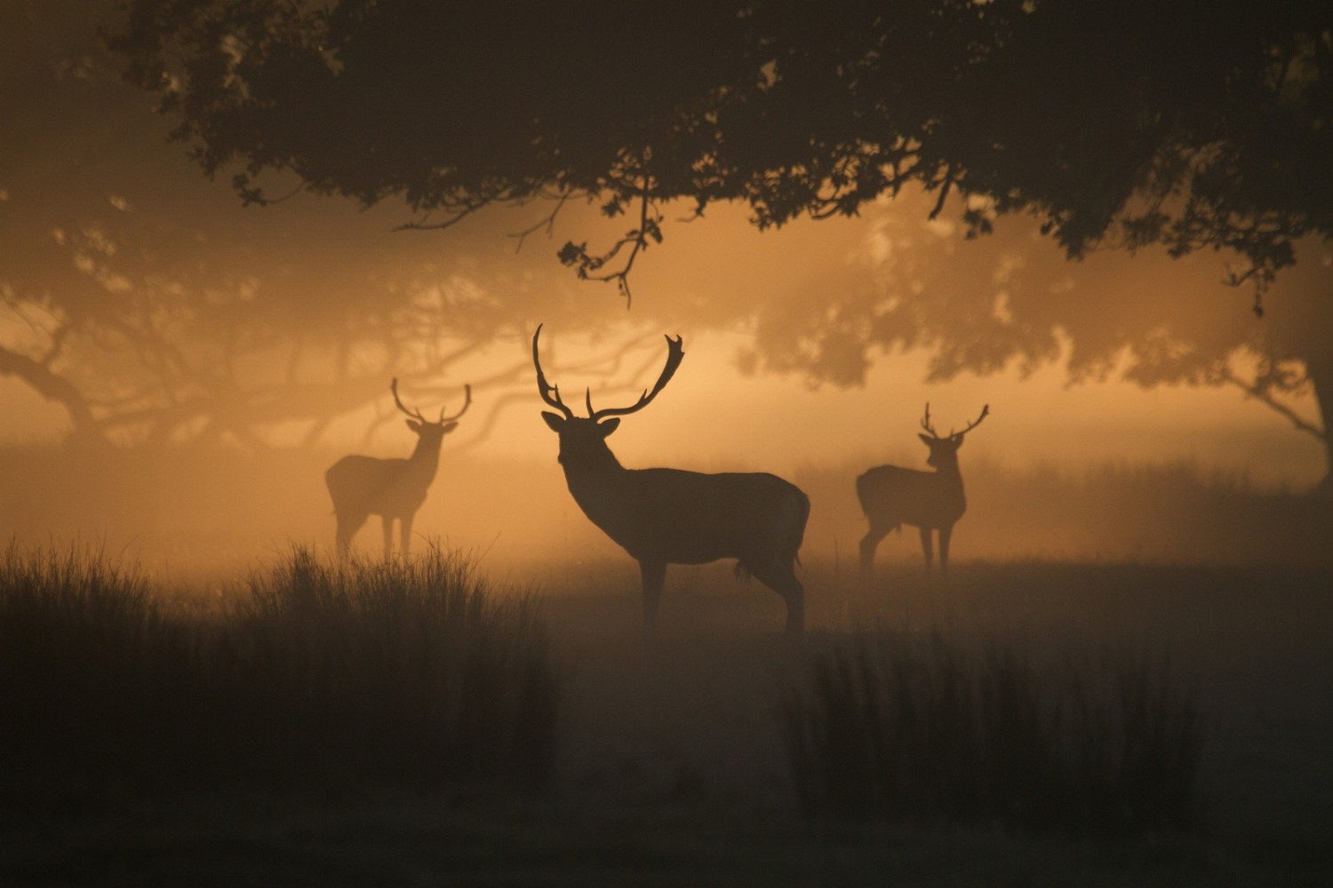 Photographing the Extremes: 30 of the Best Silhouettes on 500px