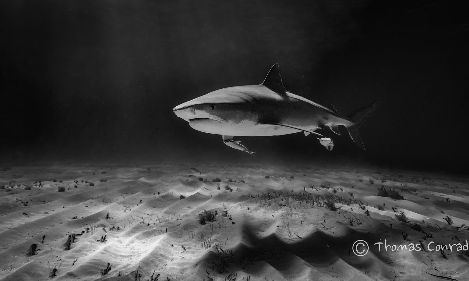 500px blog a special shark week interview with thomas conrad