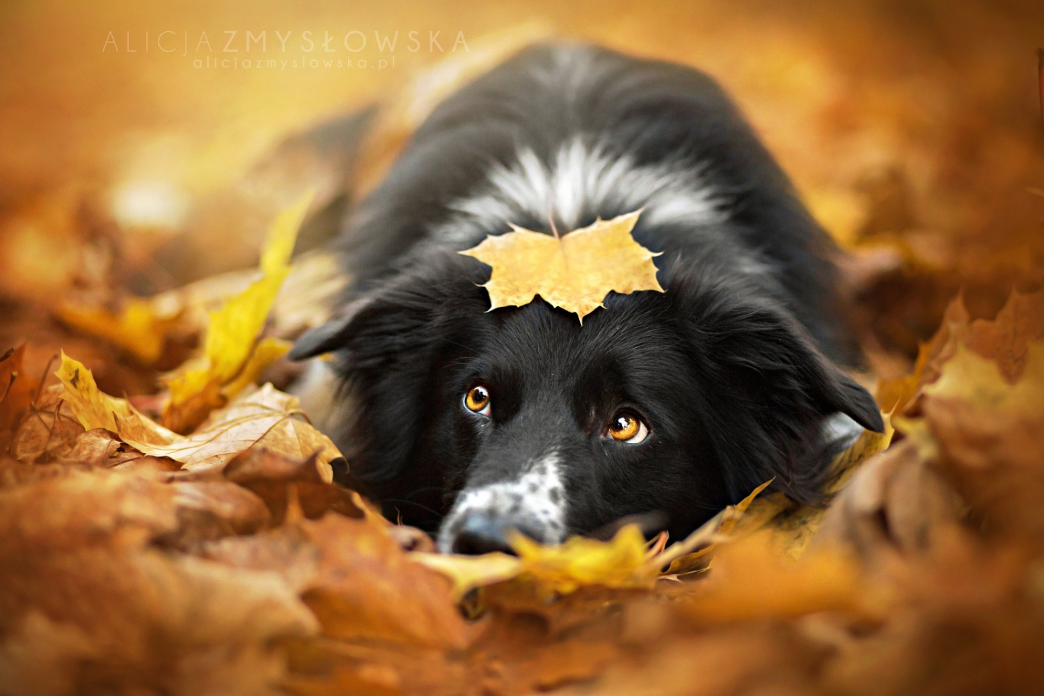 25 Most Popular Dog Photos on 500px