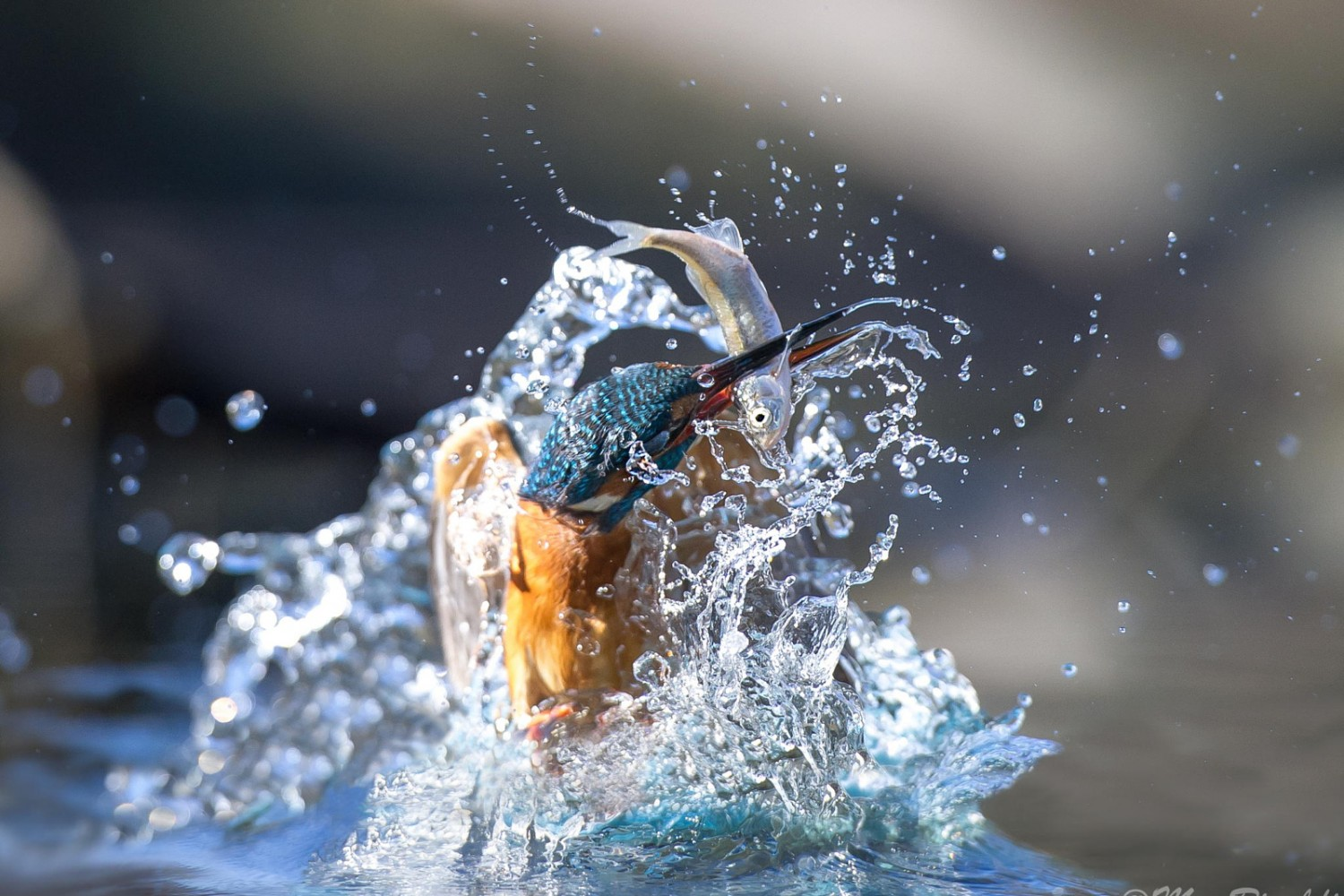 25 National Geographic-Worthy Photos of Kingfishers