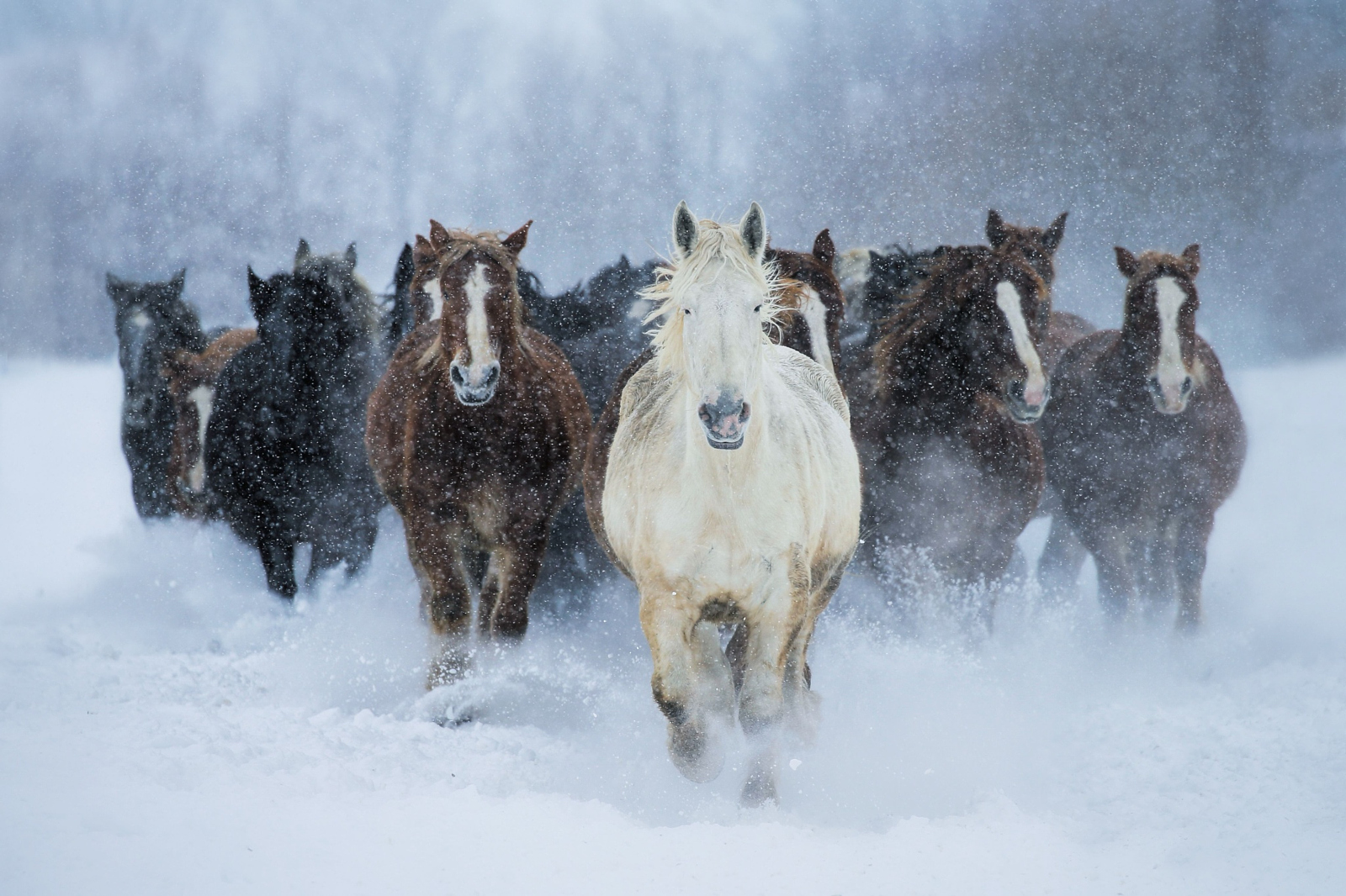 Equine Ecstasy 30 Most Popular Horse Photos On 500px 500px