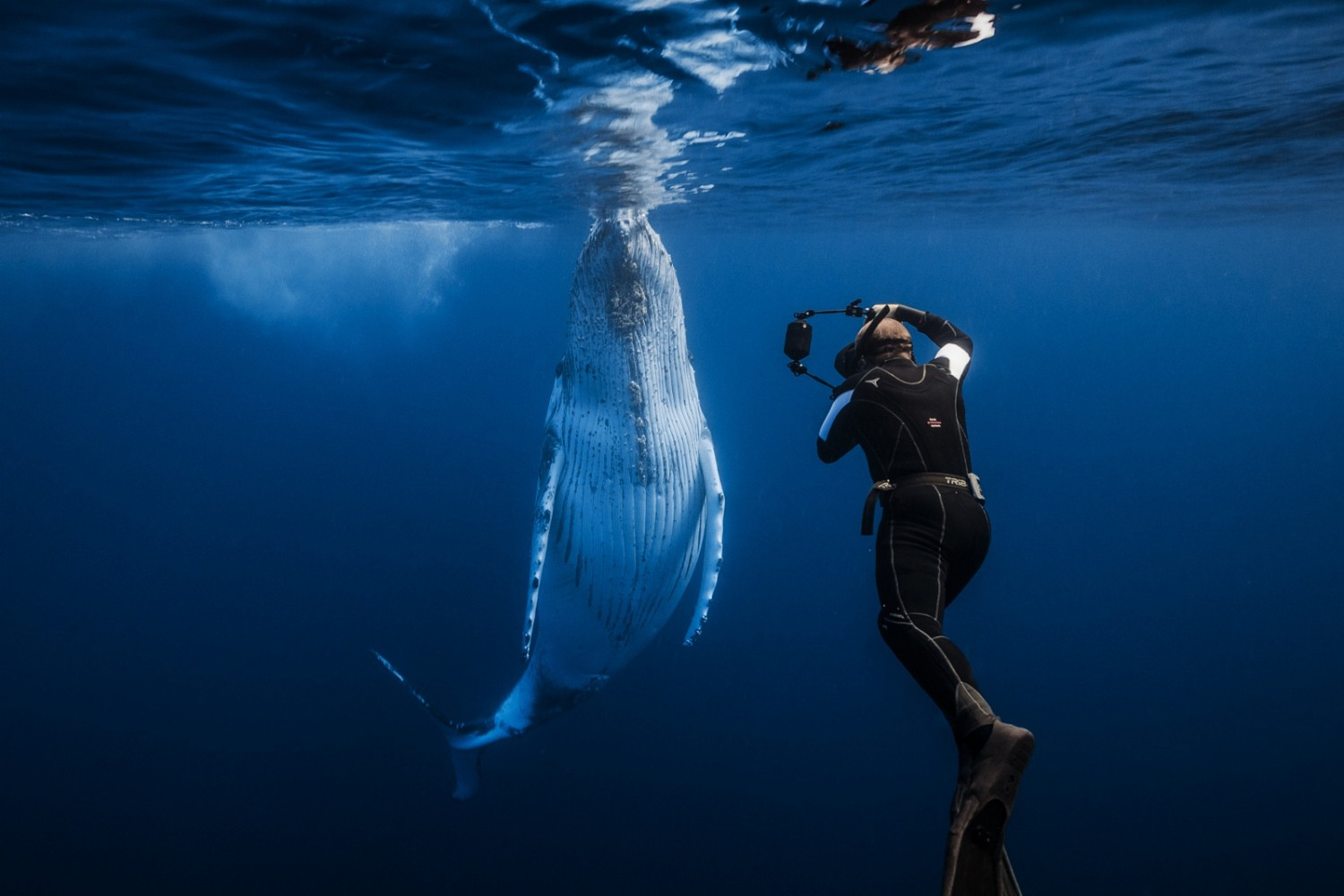 The Stories Behind the Most Breathtaking Whale Photos on 500px