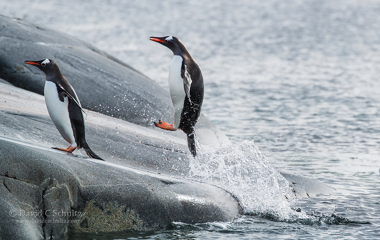 A Day in the Life of Antarctic Photographer David Schultz