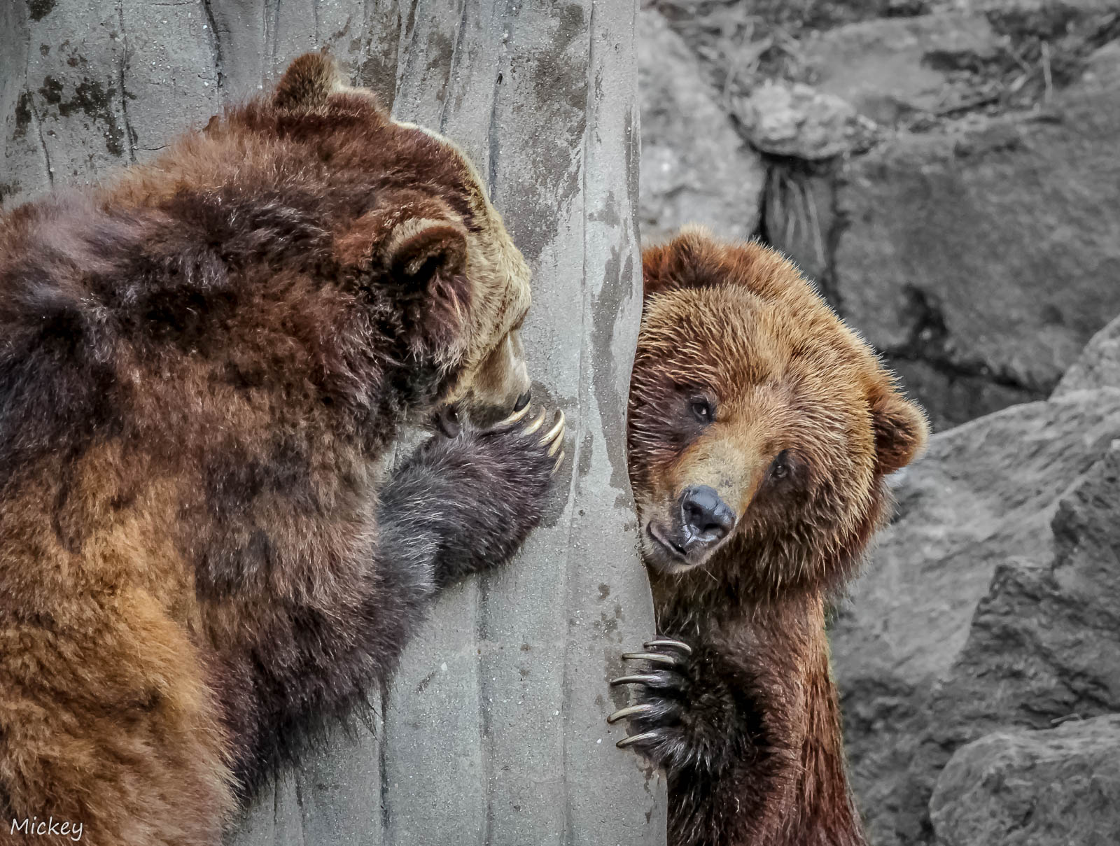 5 Tips for Capturing Beautiful Photos at the Zoo