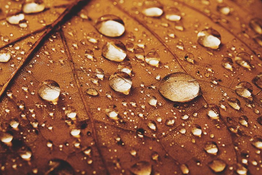 autumn1_24