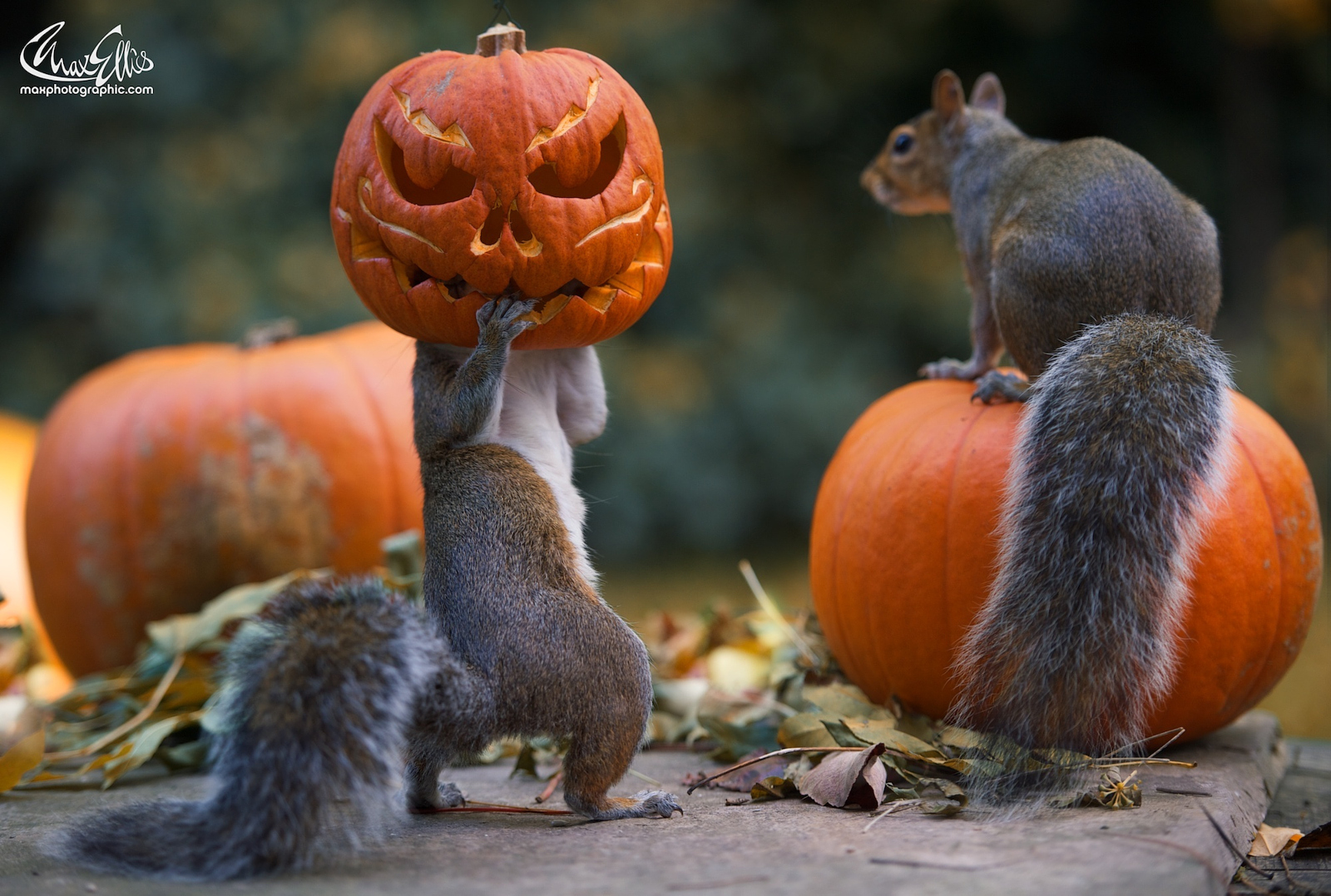 The Story Behind the Most Popular Halloween Photo on 500px