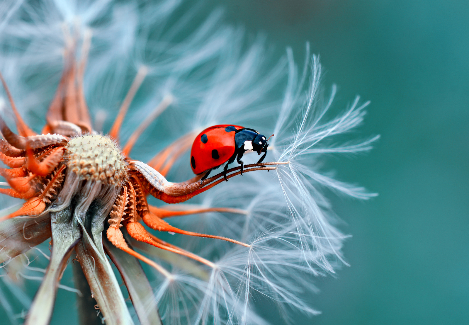 Best of 2015 top 10 macro photos