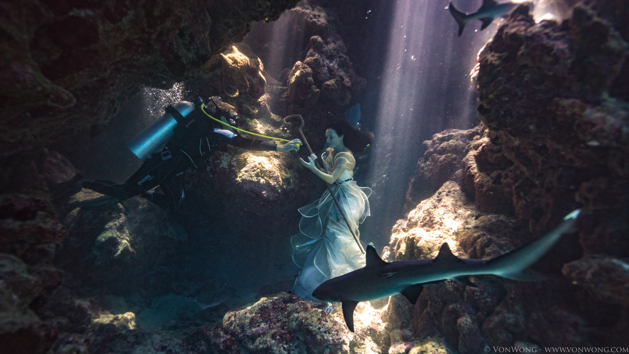 BTS_SharkShepherd_VonWong_2