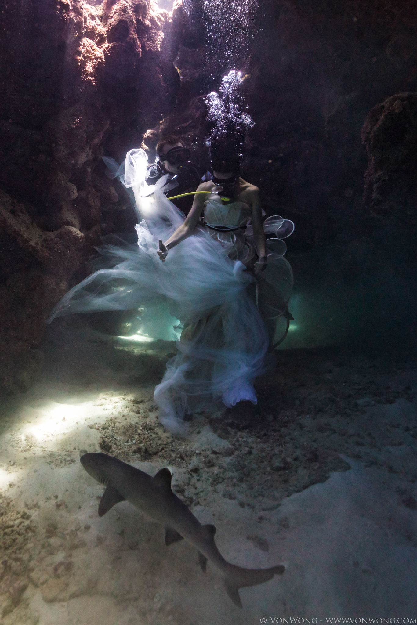 BTS_SharkShepherd_VonWong_3