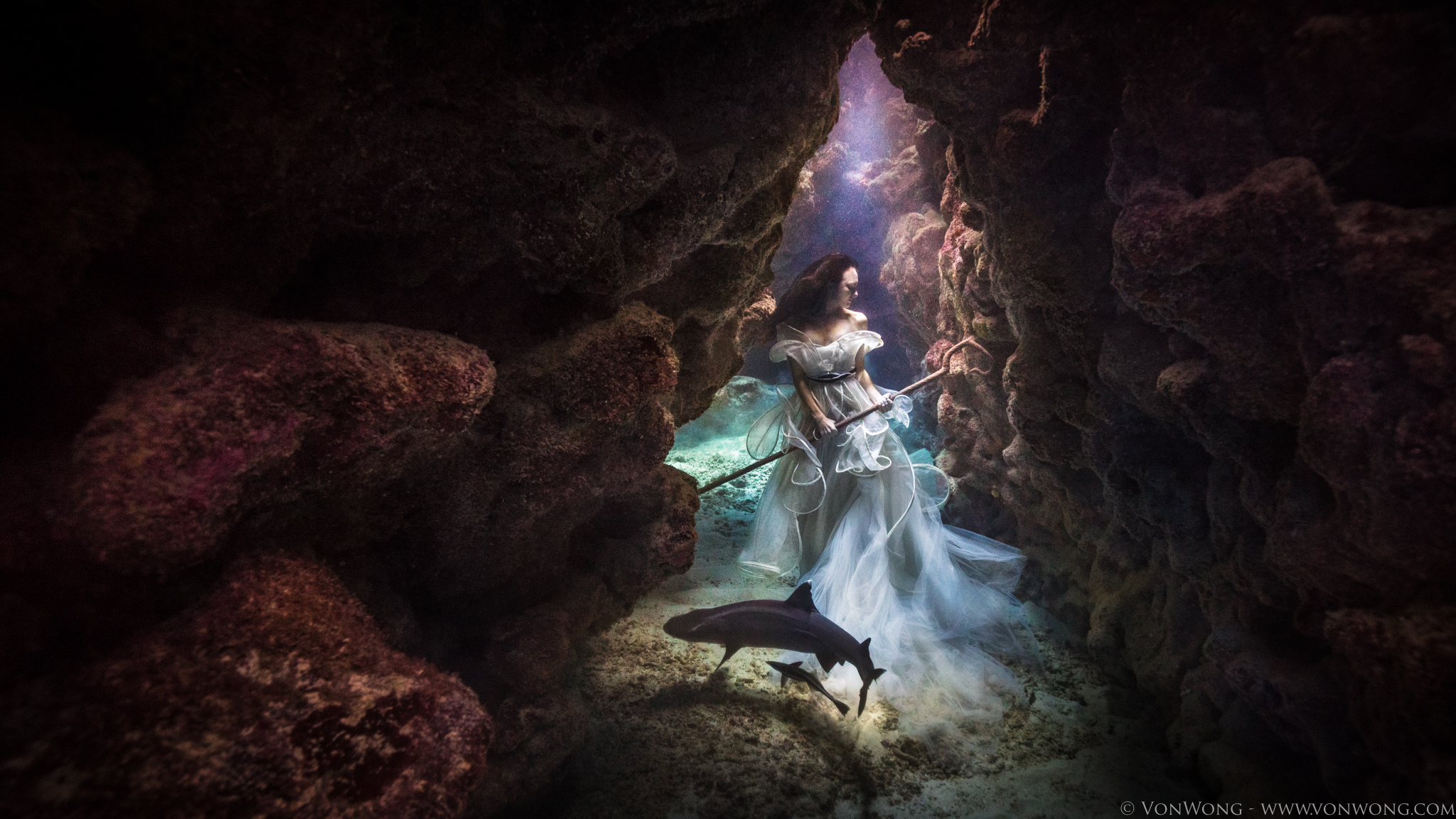 https://iso.500px.com/wp-content/uploads/2016/01/SharkShepherd_VonWong_5.jpg