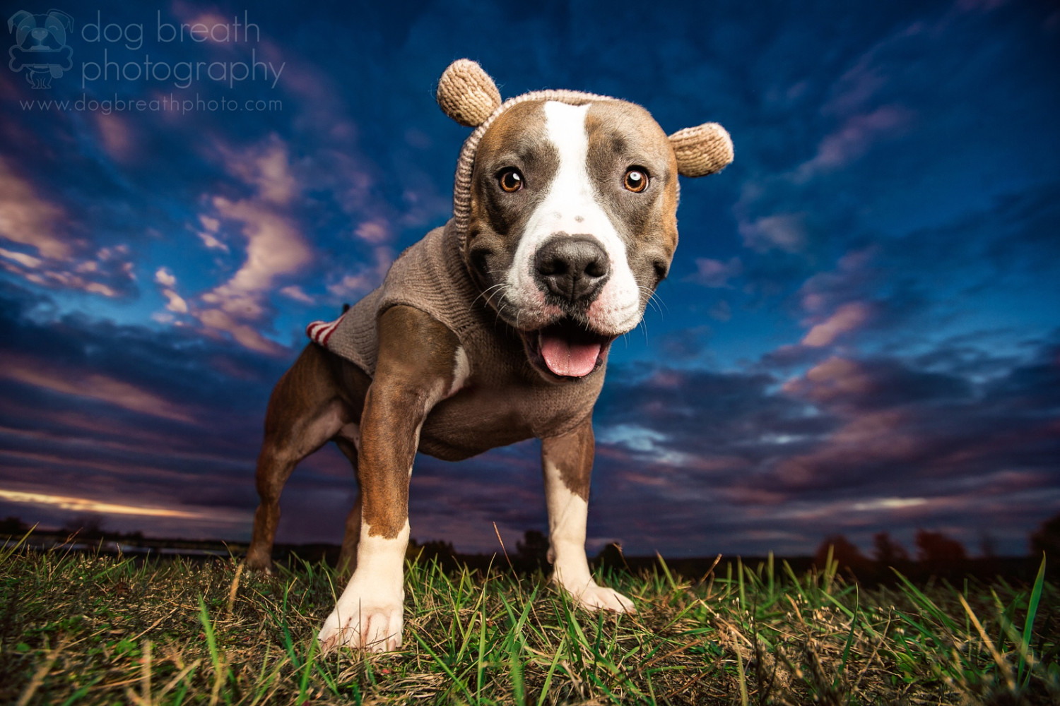 Meet One of the Best Dog Photographers on 500px... and in the World