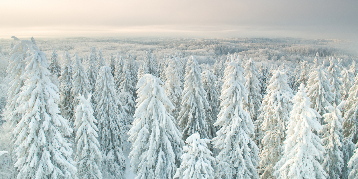 Simply Sellable: The View from the Top of Estonia