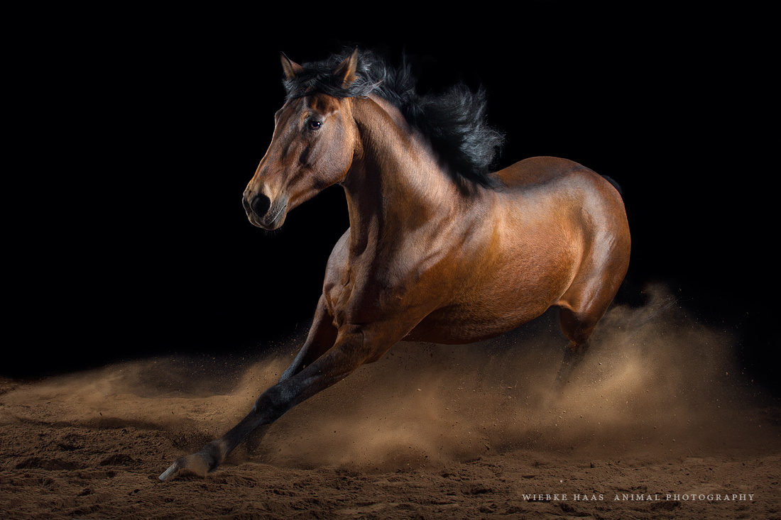 500px Blog » [Horse Photography] Capturing Equine Elegance