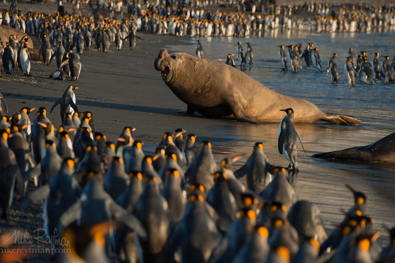 Top 20 Wildlife Photos on 500px So Far This Year