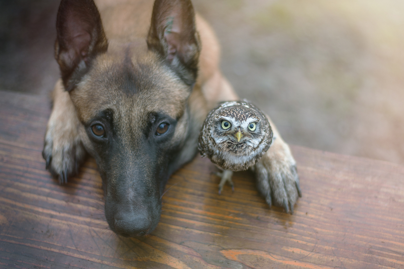 Big and Small, Together at Last: 17 Adorable Animal Photos