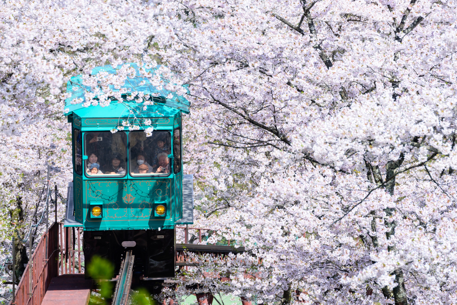 25 Must-See Cherry Blossom Photos Around the World