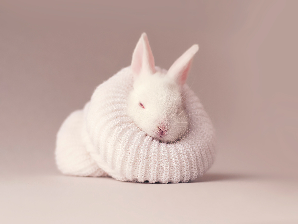 This Newborn Bunny in a Sock is the Cutest Thing You'll See All Day