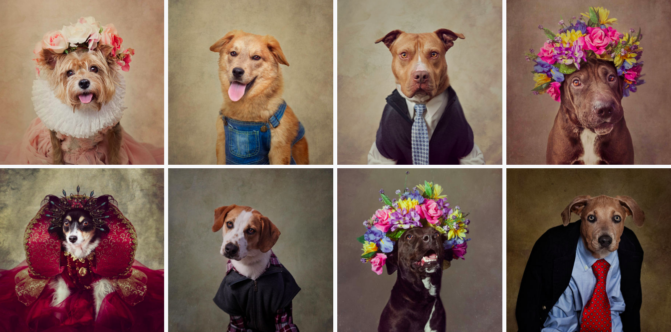 These Stylish Shelter Dog Portraits Are The Best Things You'll See All Day