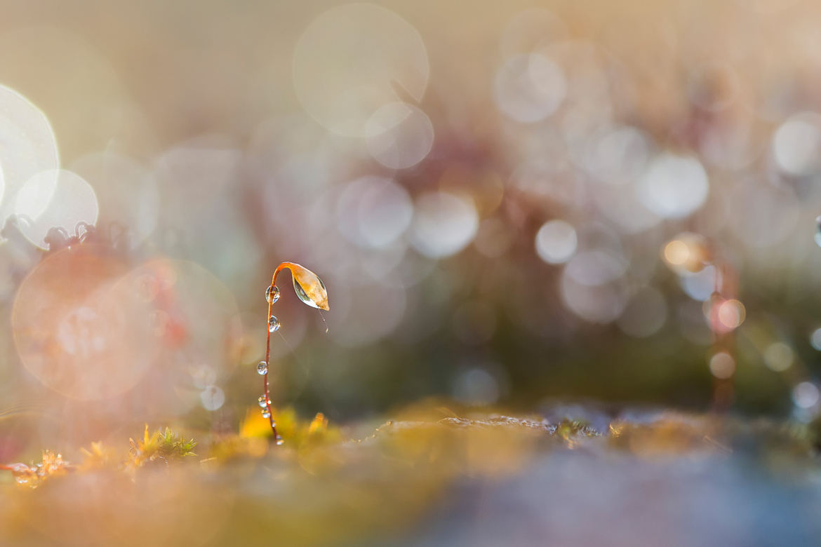 Announcing the Winners of our Bokeh Photo Quest!