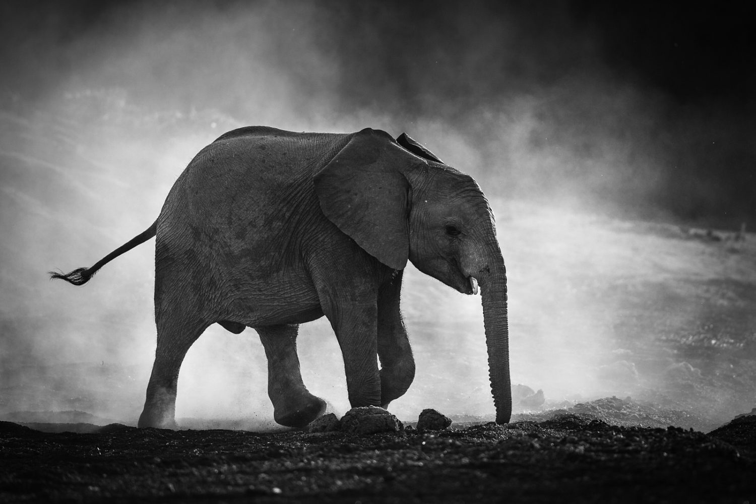 Category home decor page 7 - Tips And Tricks For Black And White Wildlife Photography