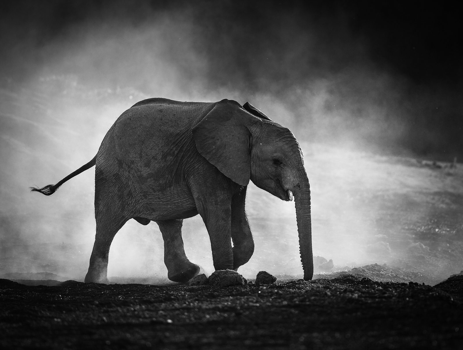 Animals In Black And White Photography