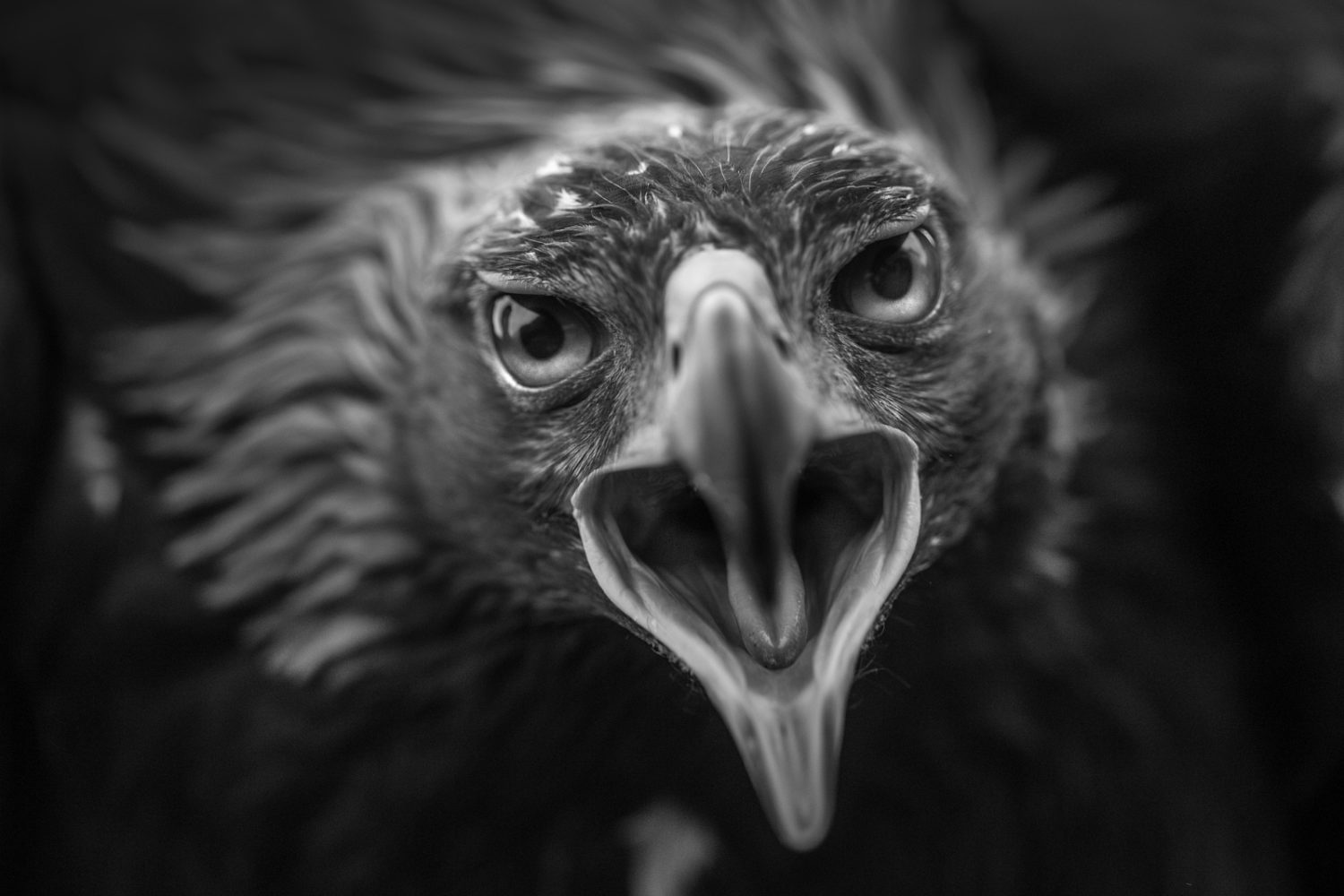 Top 20 Black and White Photos on 500px So Far This Year