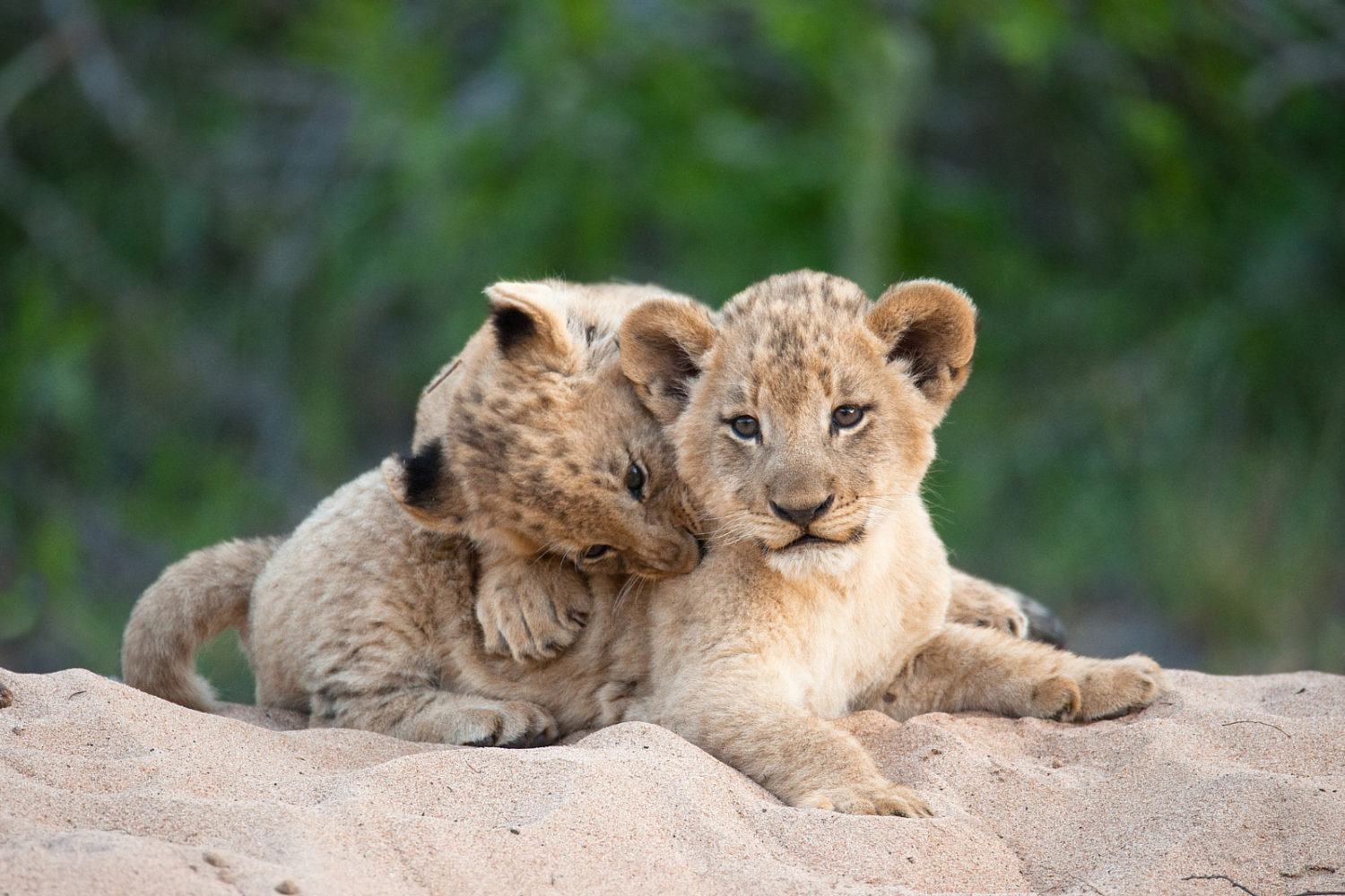 30 Cute Baby Animal Photos Found In The Wild