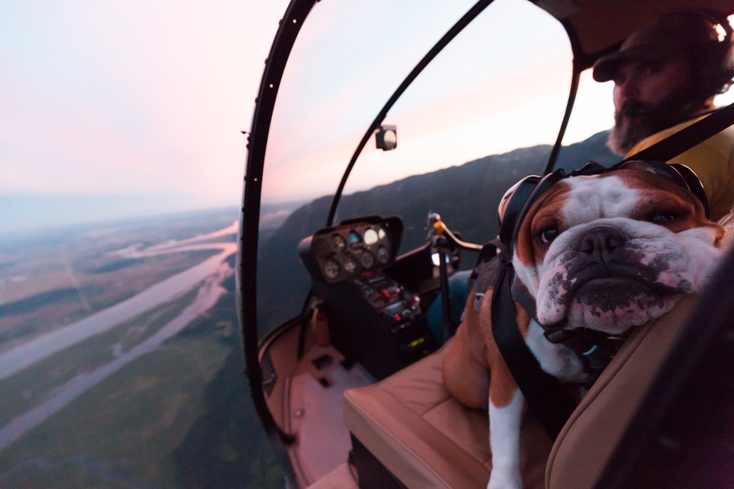 Flying with Mr Bentley the Dog by Rishad Daroowala