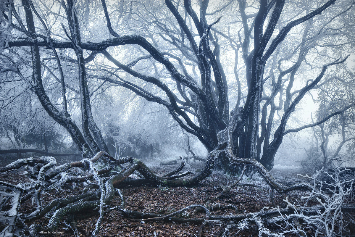 15 Magical Photos of Trees That Belong in Game of Thrones