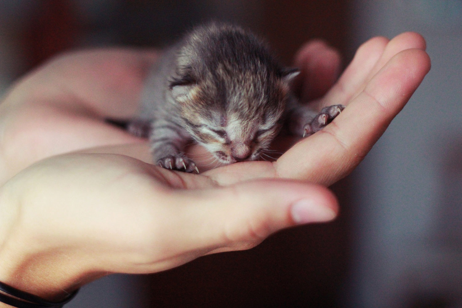 21 Purrfect Photos of Tiny Kittens That Fit In Your Palm