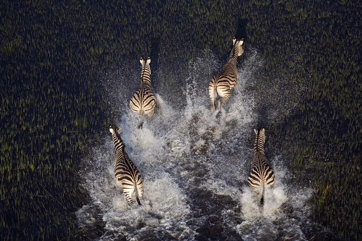 17 Amazing Aerial Photos That Capture Animal Herds In Action