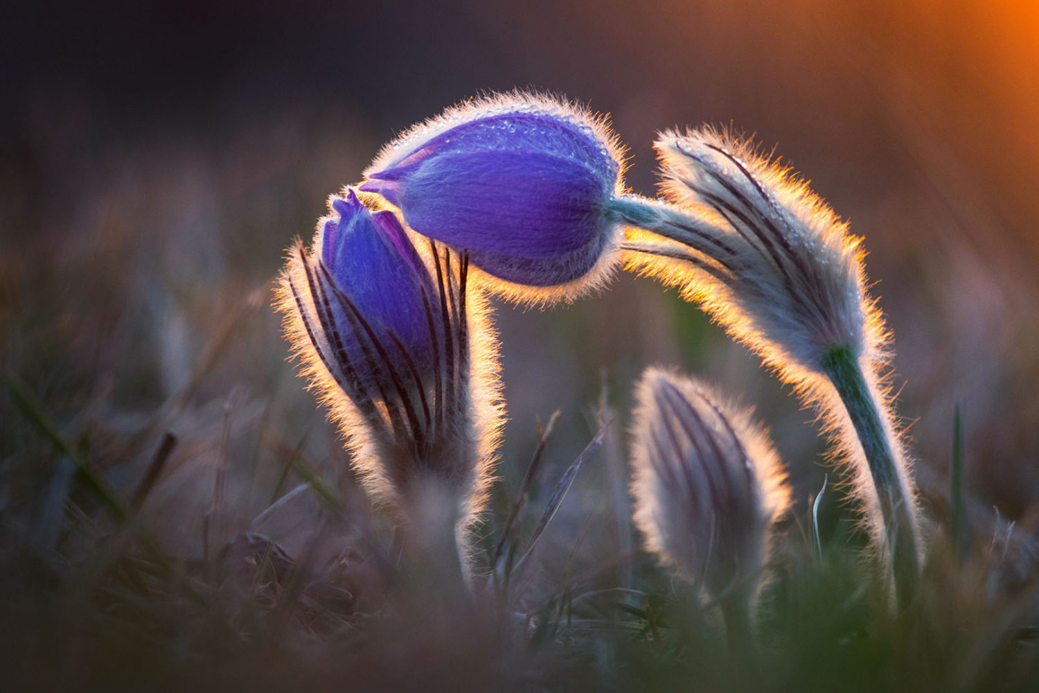 9 winning photos that perfectly combine light and nature