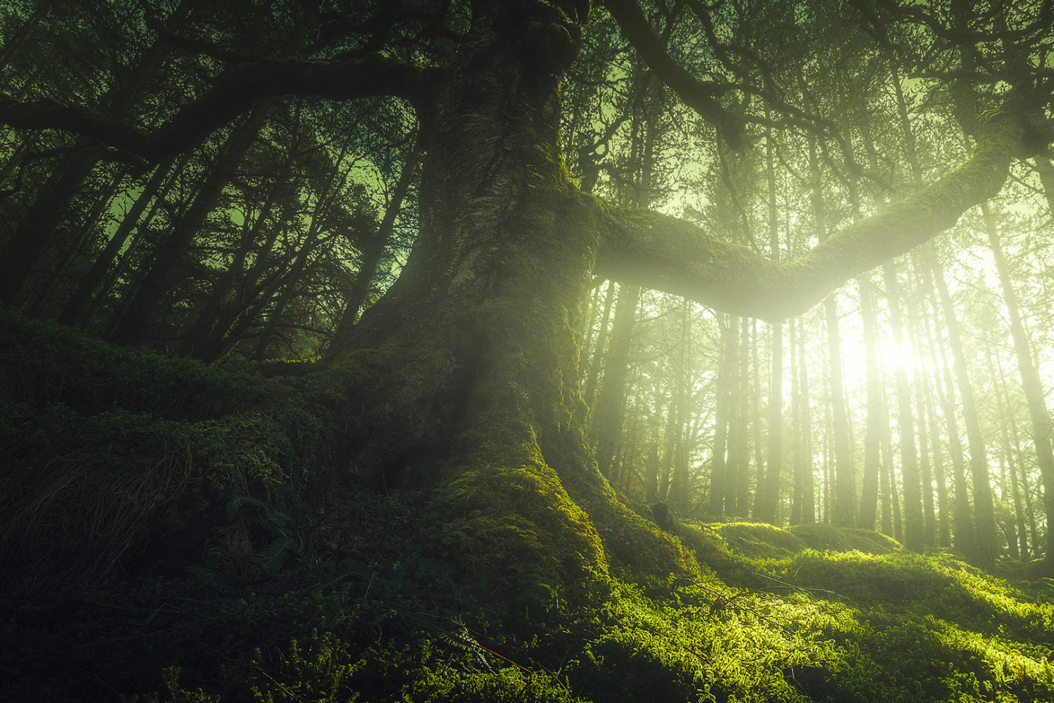 How to capture epic wide-angle photos of trees