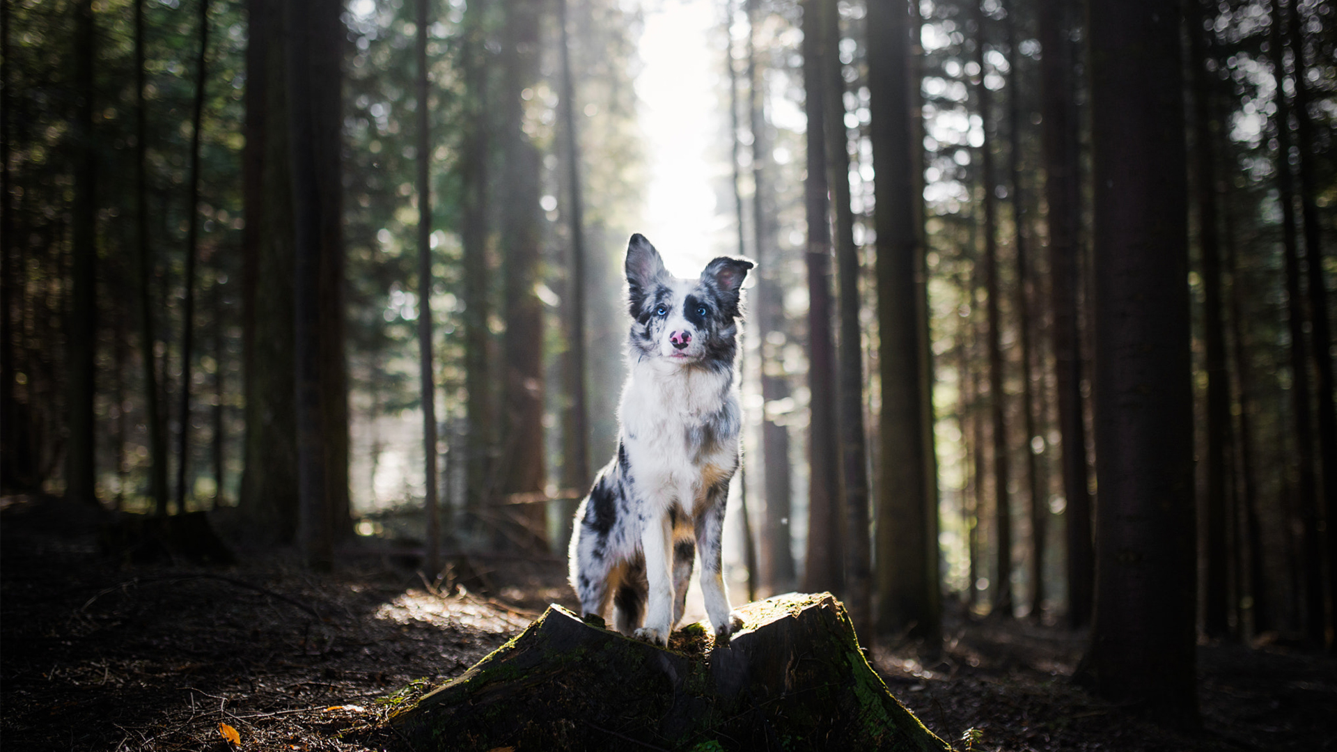 Expert tips to help you take the perfect dog photo