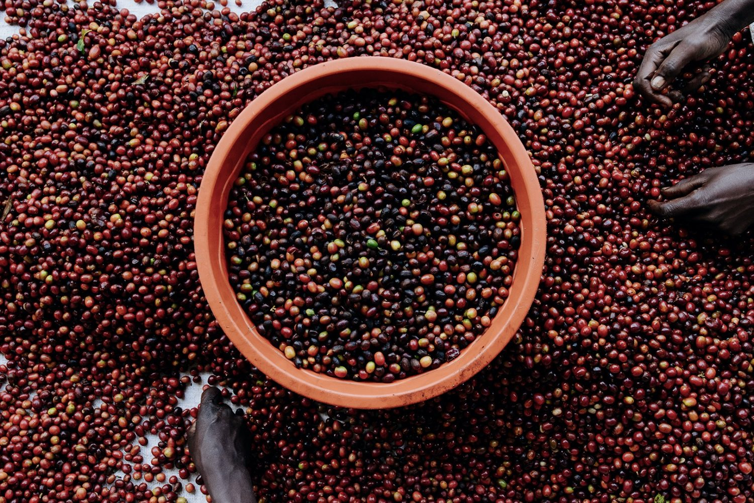 Licensing Contributor Aidan Campbell on documenting the coffee production process in Rwanda