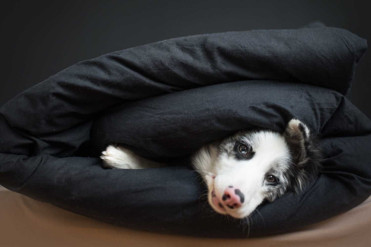 Dogs photography tips | How to photograph your dog