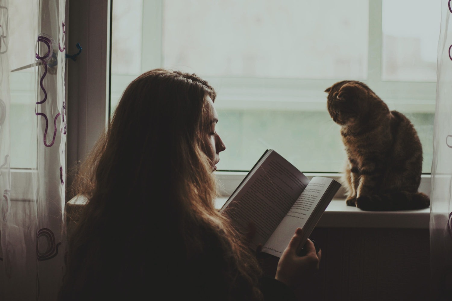 7 tips for improving your cat photography skills at home