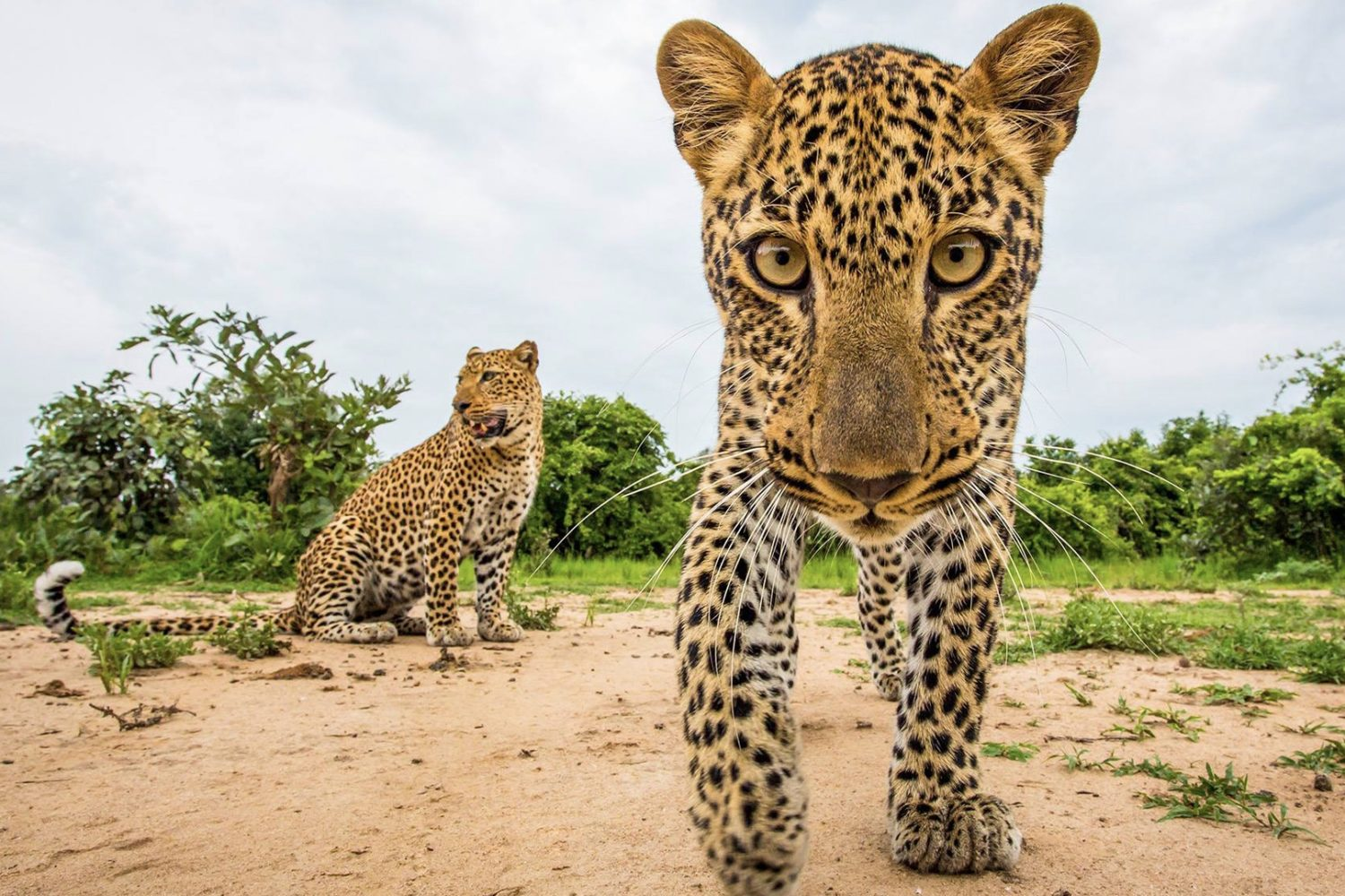 20 wildlife photos that show how beautiful the animal kingdom is