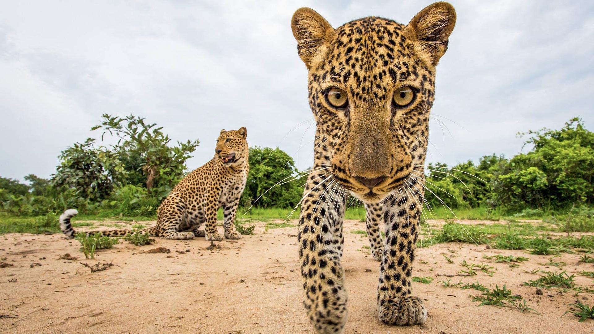 20 wildlife photos that show how beautiful the animal kingdom is
