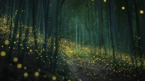 The forest at night with fireflies