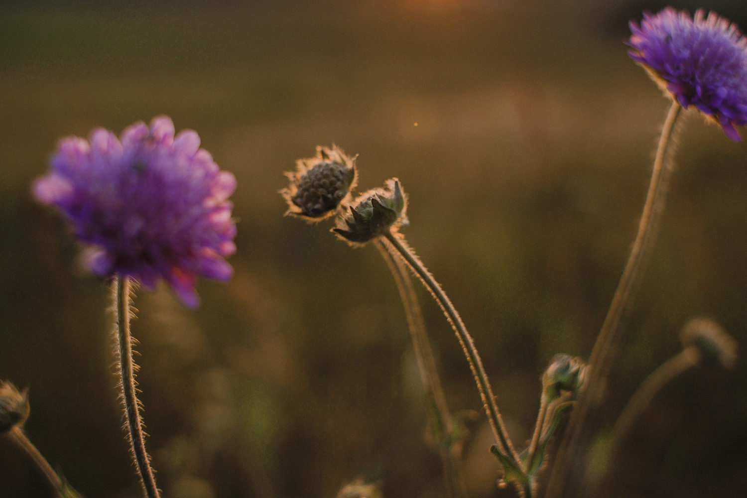 Brilliant botanicals: Nine tips for photographing your garden
